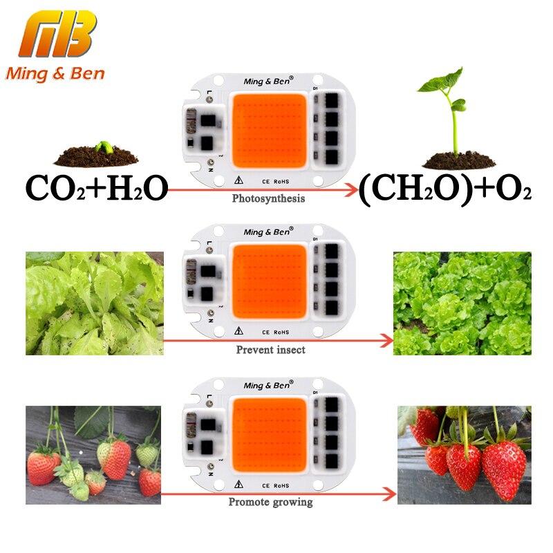 LED COB Chip For Grow Plant Light Full Spectrum 220V 110V 20W 30W 50W For Indoor Plant Seedling Grow and Flower Growth Lighting 2