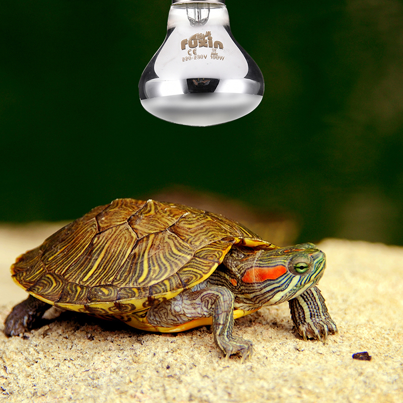 25/50/75/100w Mini Reptile Daylight Lamp Thermal Light Lamp For Snakes Lizards Tortoise E27 Reptiles Amphibian Animal Lighting #2