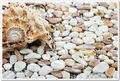 Concha blanca pura cáscara del mar mosaico de la cáscara natural lustre azulejo nacarado shell azulejos backsplash de la cocina backsplash del azulejo