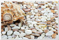 pure white shell shell mosaic tile sea shell natural luster mother of pearl tile backsplash shell tiles kitchen backsplash tile