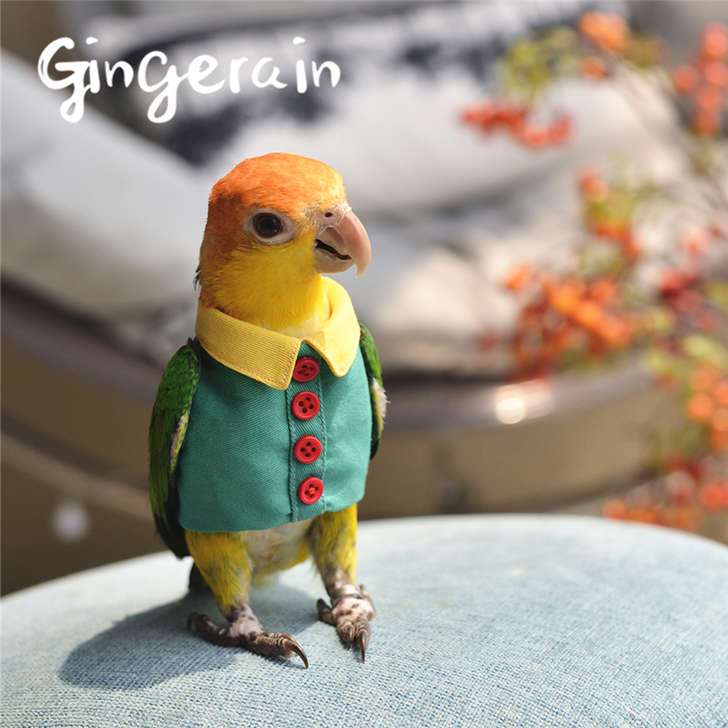 Gingerain Bird Clothes Parrot Clothes Button Shirt Original Hand-made Custom Bird Clothes Button Shirt