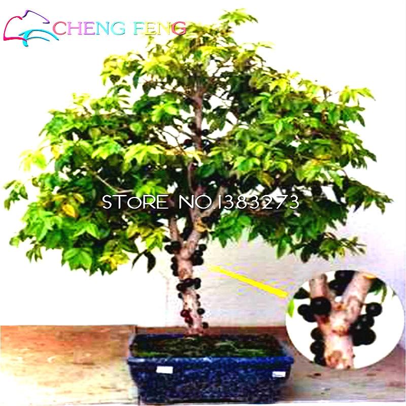 30 Pcs Sementes De Frutas Uva Sementes Da Arvore De