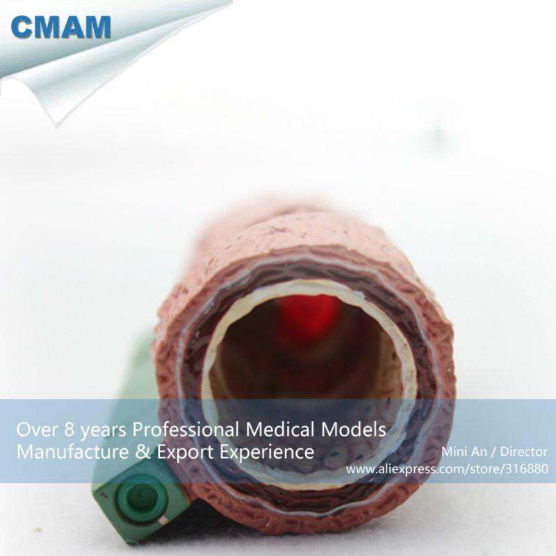 Famoso Modelo Del Músculo Anatomía Etiquetado Motivo - Anatomía de ...