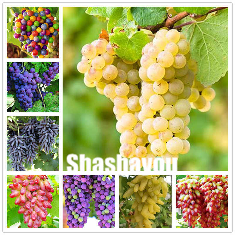 Sale! 100 pcs Grape plants Black Grape Tree bonsai Grows Fruits Bonsai Non-GMO plants Edible food balcony potted garden plants
