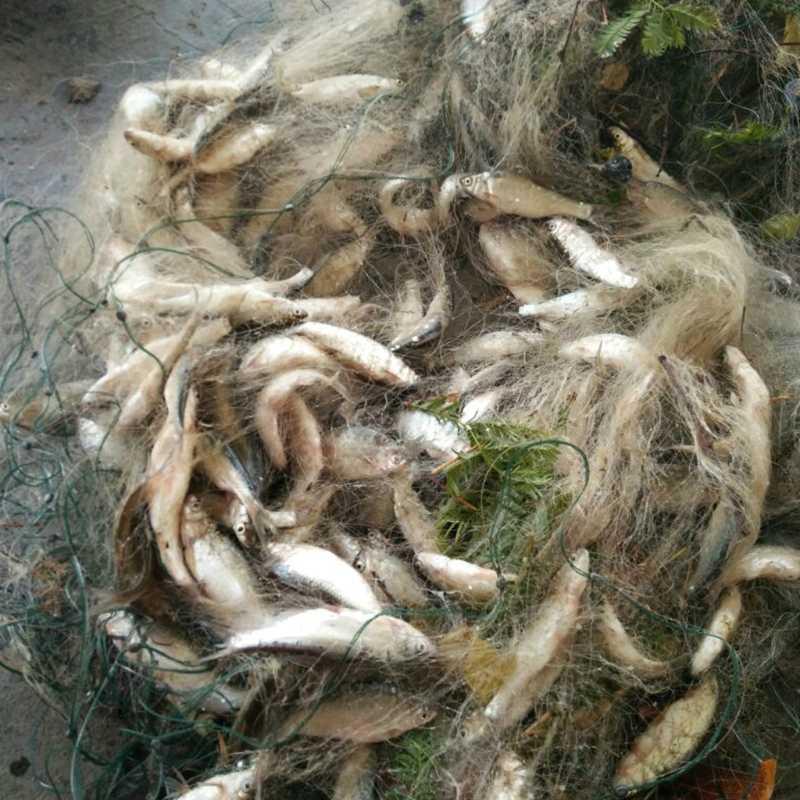 דיג דגי רשת מלכודת חכת גיל הנקי בנוטינג להתמודד חיצוני 8M x 0.8M