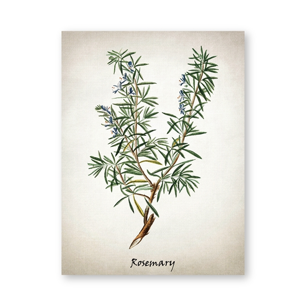 Herb Canvas Art Painting Vintage Herbal Illustrations Poster and Prints Erbe culinarie Cucina botanica Wall Art Picture Decor A