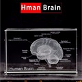 1 Pc/Pack Cool 3D Crystal Inside-Carving Human Brain for Art Sketch & Anatomy & Medical Education