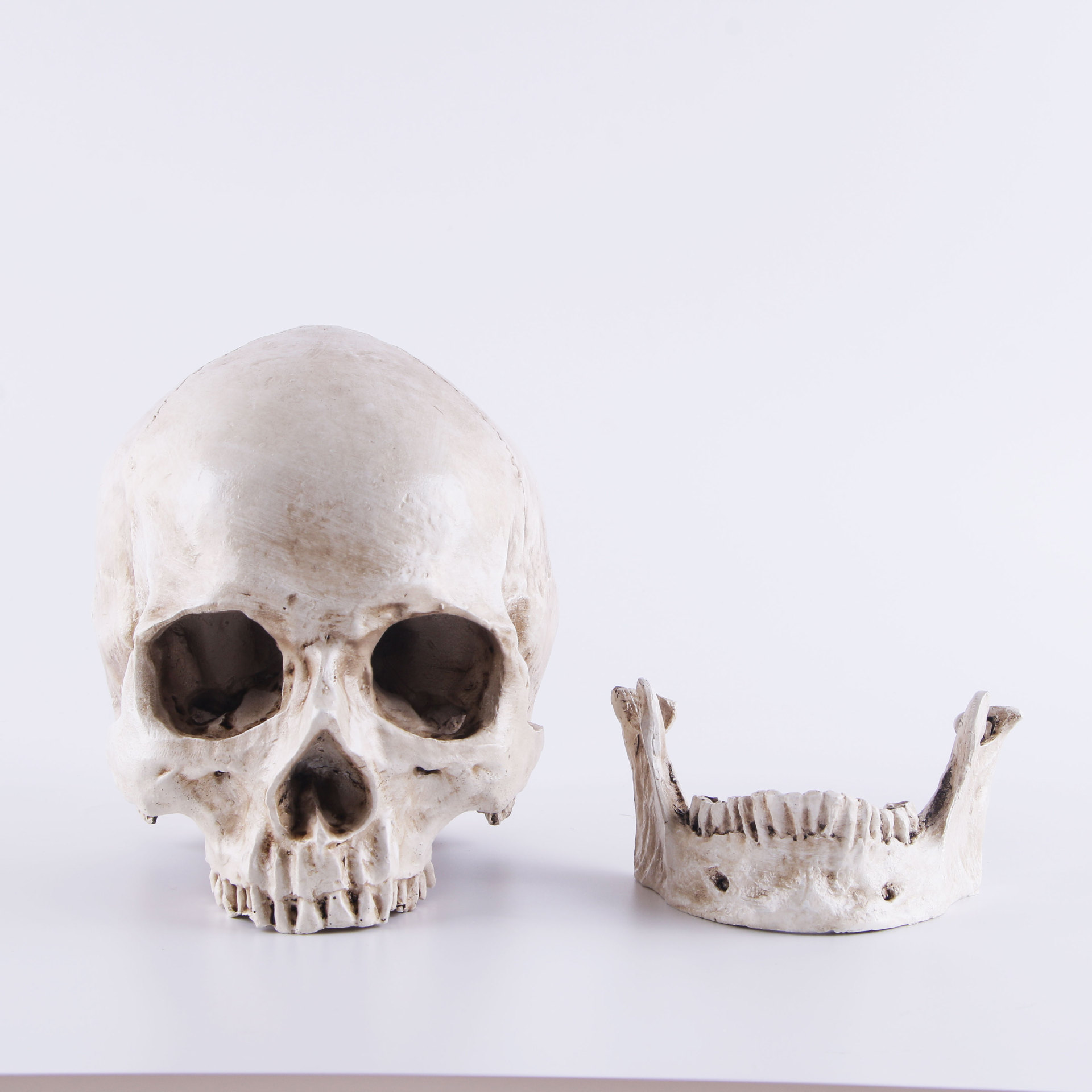 1:1 Resin Skull Sculpture Education And Painting Dedicated Medical Model Realistic Lifesize Home Decoration Accessories