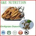 Contra El Cáncer Orgánica Cordyceps Cápsula 20:1 500 mg * 400 unids