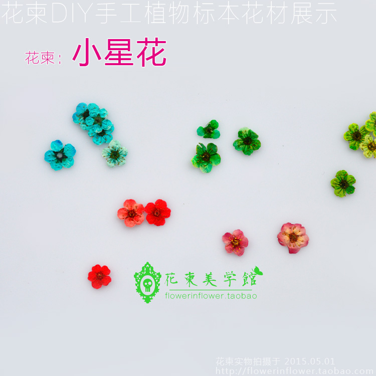 Flower Invitation Small star flowers diy dried flowers florizone glue natural branches in Jewelry Findings Components from Jewelry Accessories