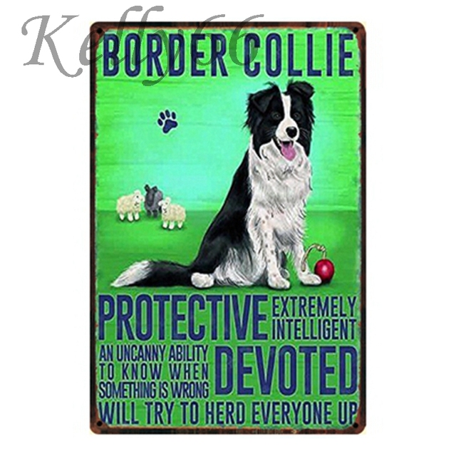 Border Collie Metal Tin Sign Poster Pet Store Room Wall Art Iron Painting 2030 Cm Size Y-1153