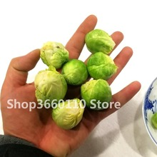 limited activity & Brussels sprouts cabbage cabbage four seasons sowing garden balcony potted Green vegetable bonsai 100pcs цены онлайн