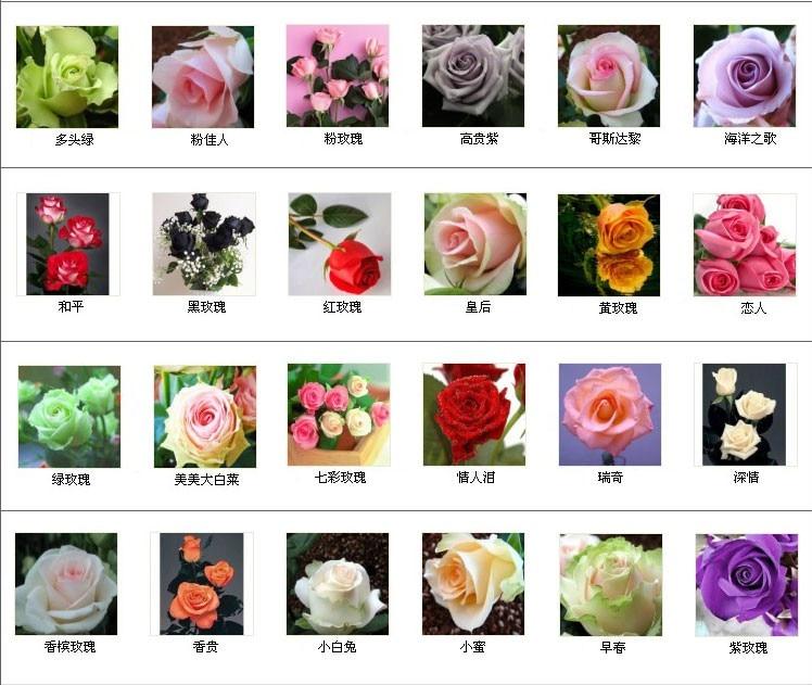 240 pcs lot 24 warna campuran warna Rose benih Biru merah