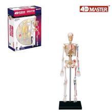 4d 해골 모델 46 부분 인간의 해부학 모델, 새로운 3d 해골 조립 모델.