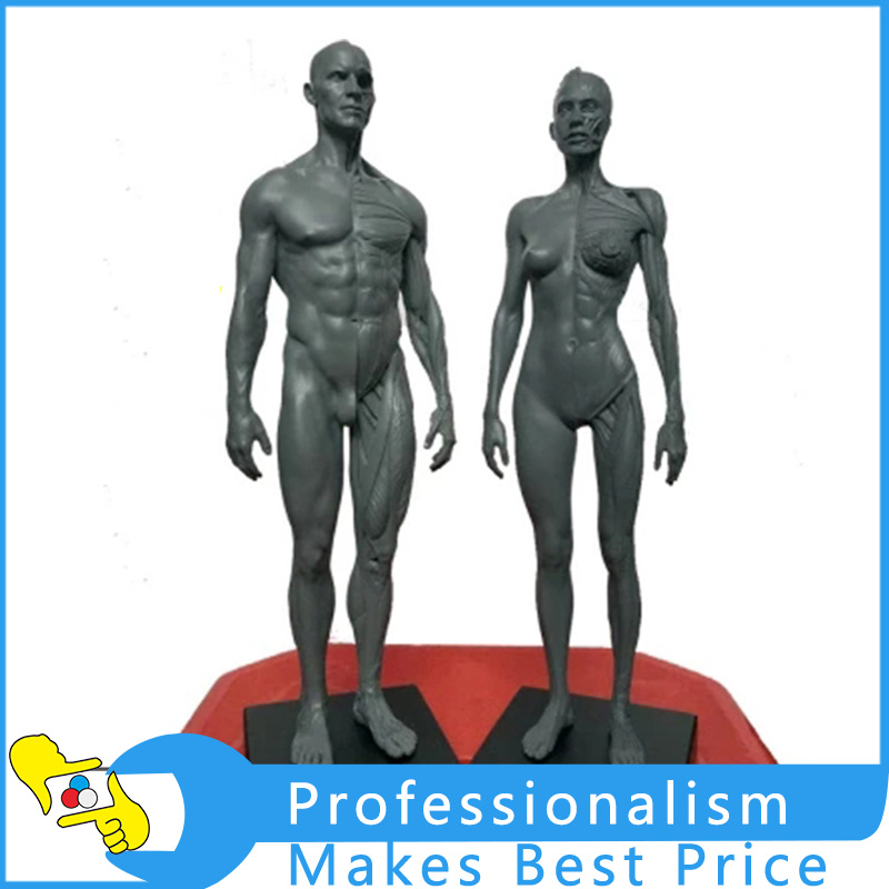 30cm Height Human Anatomical Anatomy Skull Blood Sculpture Head Body Model Muscle Bone Model Male and Female medical science colored muscle origins and insertions in half head life size plastic skull model