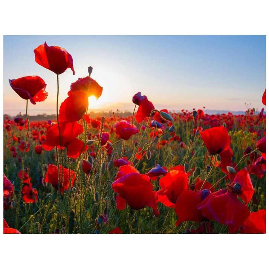 Diamond Embroidery Red Poppy sunset landscape Needlework 5D DIY Diamond Painting Flower sea Full Square Rhinestone Mosaic Decor