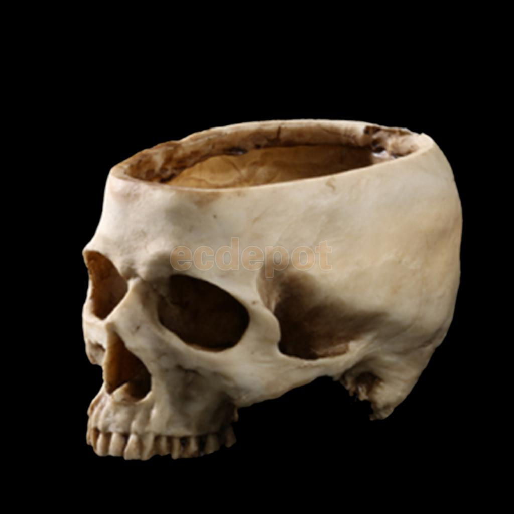 compare prices on skull planters- online shopping/buy low price, Skeleton