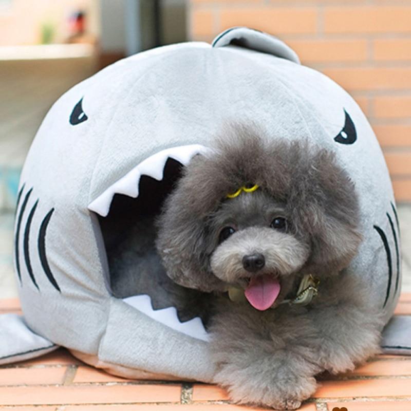Акула-кошка