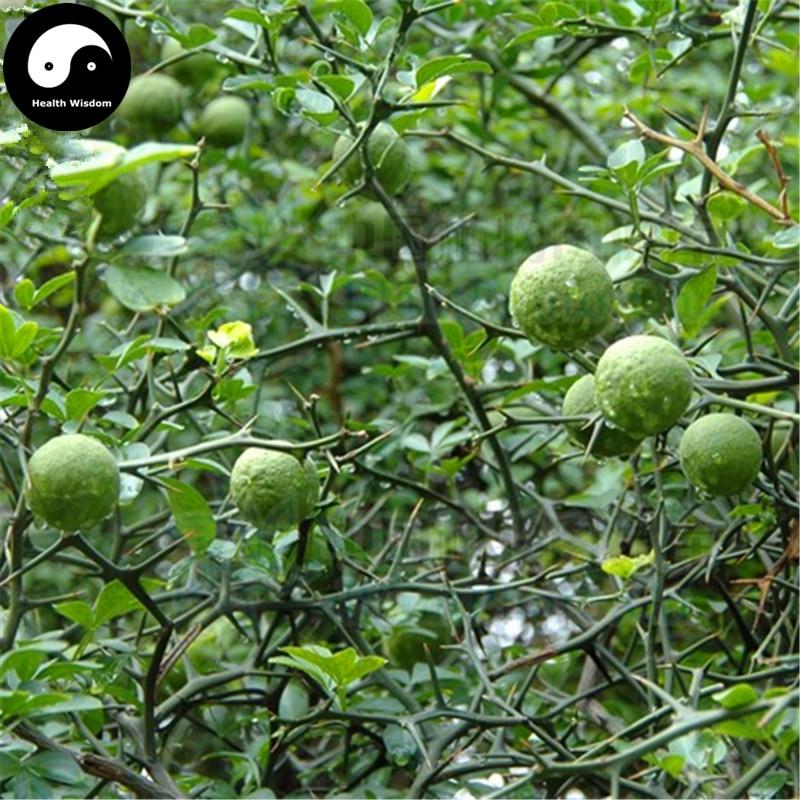 Buy Bitter Orange Tree Semente 120pcs Plant Citrus Aurantium For Aurantii Zhi Qiao