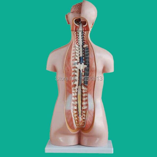 جذع سكس 85 سنتيمتر بأعضاء داخلية 20 قطعة