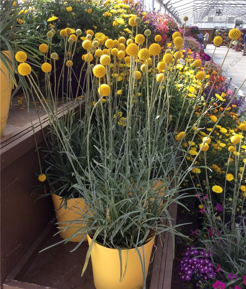 Emejing fleurs jaunes jardin vivace gallery design trends 2017