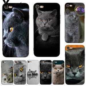 Yinuoda For iphone 7 6 X Case British Shorthair cat Top Design Phone Case for iPhone 7 6 X 8 6s Plus 5 5S XS XR Case(China)