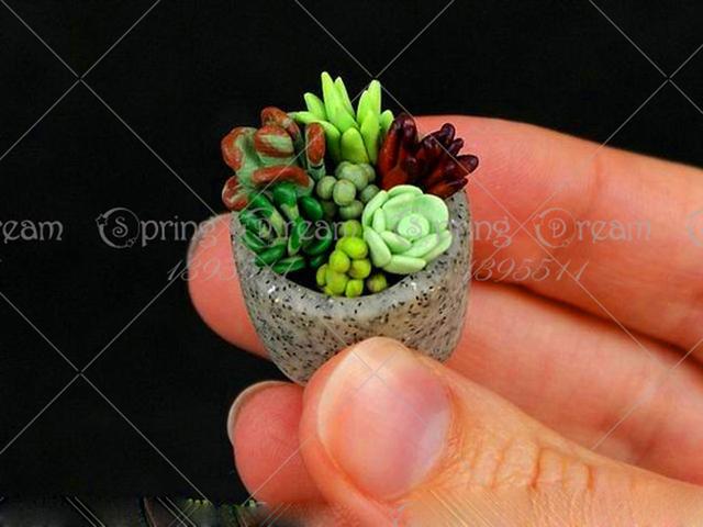 Mini Succulent Cactus Seeds (500 Pieces)