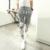 2015 HCXY marca de ropa de primavera y otoño nuevos pantalones de chándal hombres tricolor letras impresas