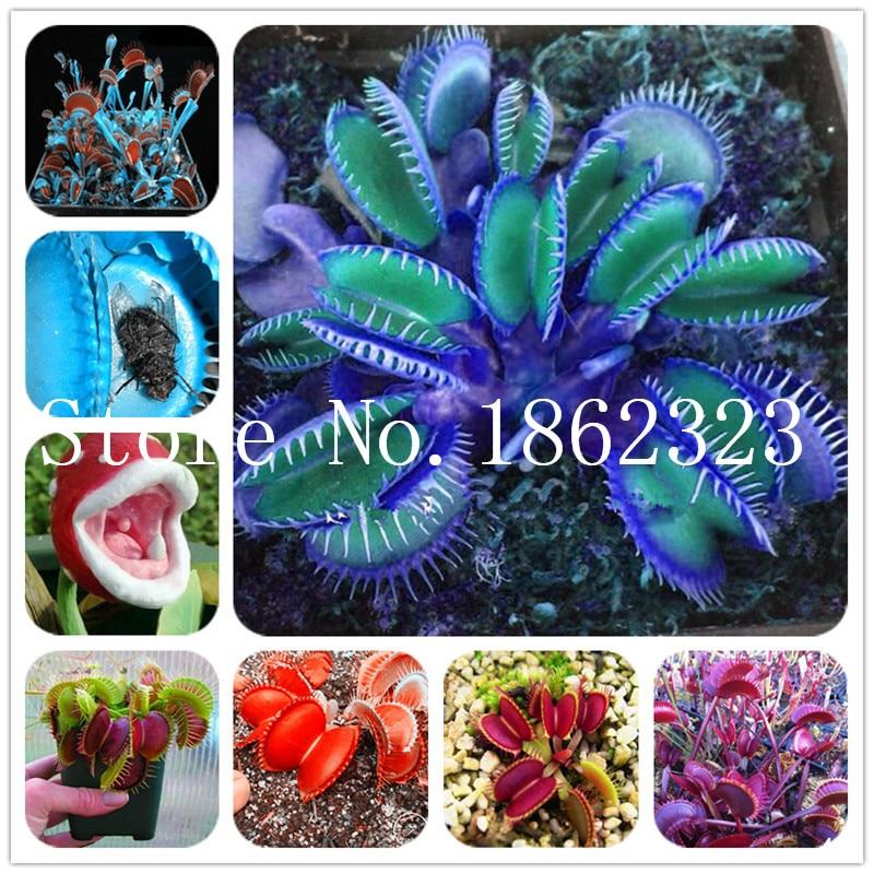 100 PCs//Sac Carolina Reaper Plante Chilli Pepper Seeds Super Chaud Cadeau Achat 2 Obtenez 3