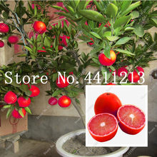 15Pcs Red Lemon Tree Also Is Blood Orange Organic Fruit Bonsai High Survival Rate Bonsai Red Lime Plant Healthy Food Home Garden(China)
