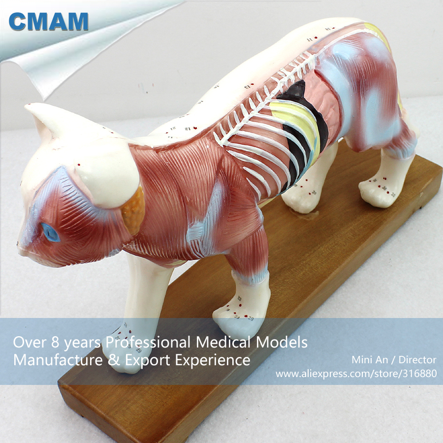 12004 CMAM-A04 Veterinarian's Cat Feline Acupuncture Model, Medical Science Educational Teaching Anatomical Models 12005 cmam a05 dog acupuncture model animal acupuncture models for veterinarian s reference