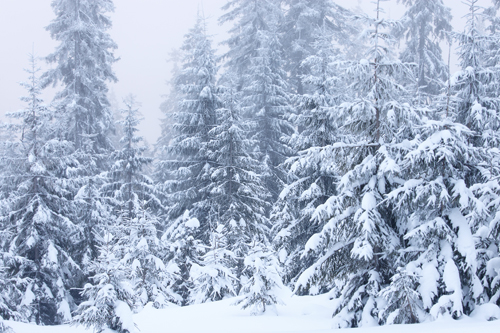 HUAYI  Christmas colorPhotography Backdrop Scenery Custom Photo Portrait Studios Background winter pine backdrop XT4797 love photography backdrop scenery custom photo portrait studios background valentine s day backdrop f 2908