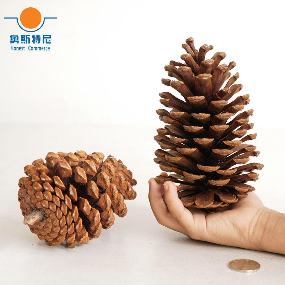 2pcs 13-15cm big size naturally pine cone Christmas decoration bts taehyung warriors