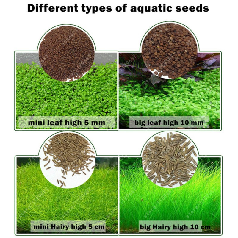 Aquarium Plant Seeds Water Aquatic Green Water Grass Decoration Easy Planting Fish Tank Landscape Ornament image