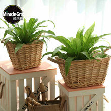 Willow Pot * Square Pot * Garden storage basket * bamboo flowerpot * Plant flower pot
