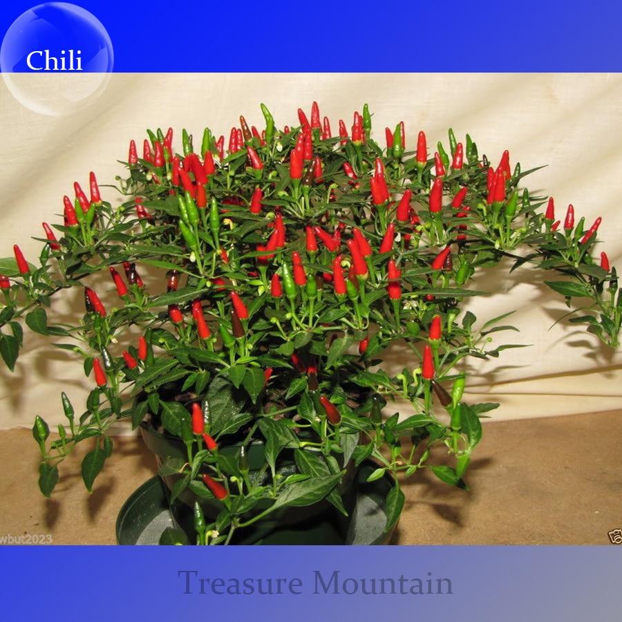 Mini chili peppers reviews online shopping mini chili for Giant chilli thai