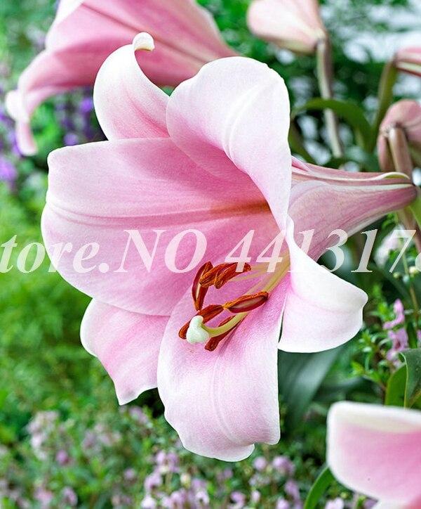 99058-00-BAKI_20120427235100