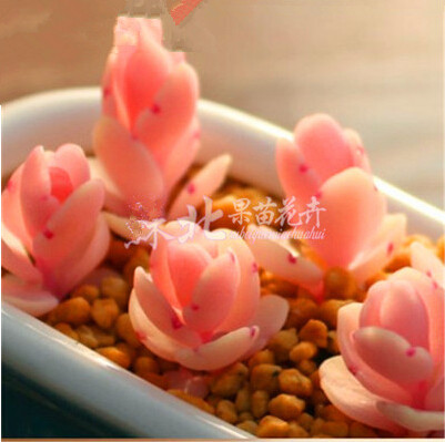 Freeshipping 60pc German imports of potted flowers sedum succulents seed radiation wonderful fleshy seed Ruby piece