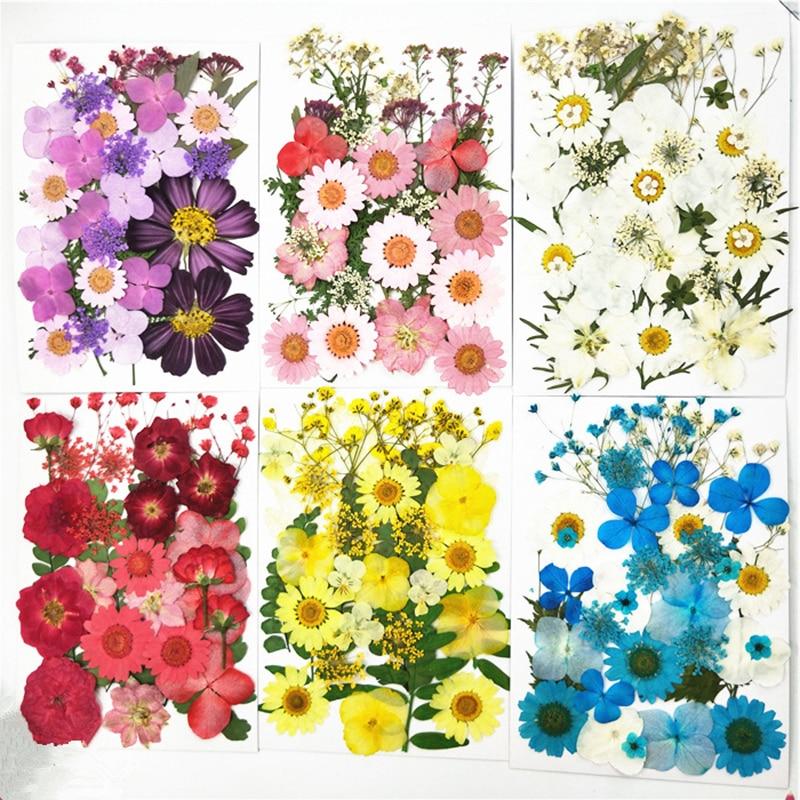 PipiFren маленькие сушеные цветы для скрапбукинга, сухое самодельное декоративное украшение для цветов, домашние мини-цветы