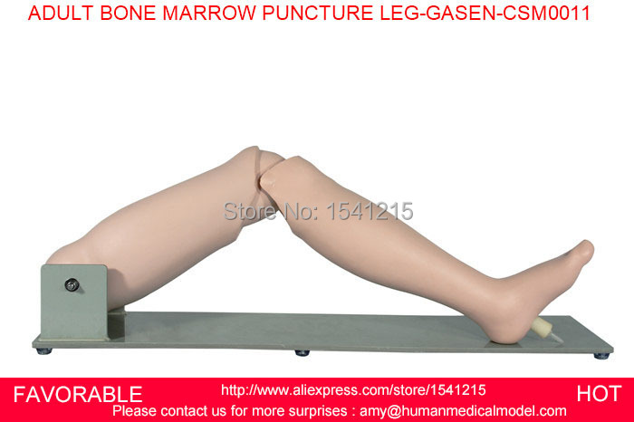 ADVANCED BONE MARROW PUNCTURE AND FEMORAL VENIPUNCTURE TMARROW PUNCTURE SIMULATOR ADULT BONE MARROW PUNCTURE LEG-GASEN-CSM0011 high quantity medicine detection type blood and marrow test slides