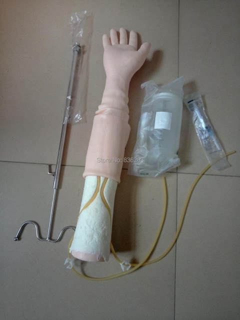 Online Shop Life Size Anatomical IV Phlebotomy Venipuncture Practice ...