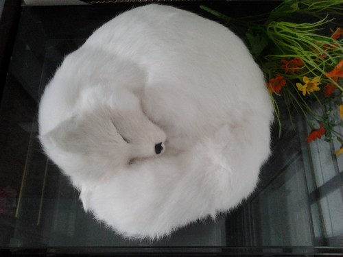 Compare Prices on Christmas White Fox Decoration- Online Shopping ...