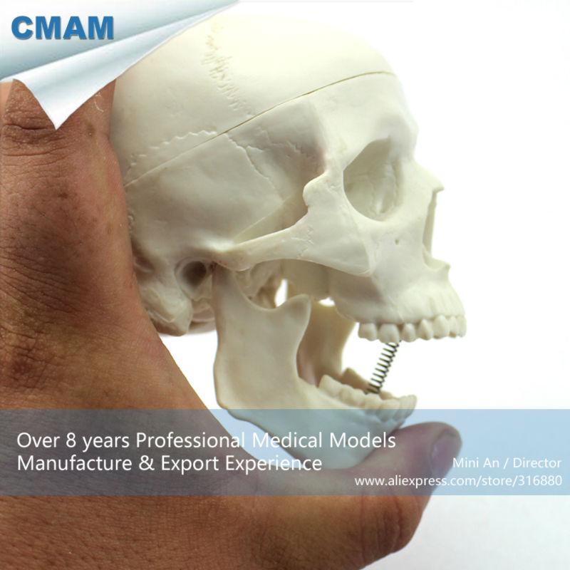 12334 CMAM-SKULL08 Mini Skull Model with Artistic value, Hand Play Model, Precise Anatomical Skull Model for Medical Science 12540 cmam viscera03 basic structure medical science plastic liver model anatomical model