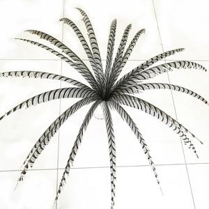 Image 1 - Hotsale 10 adet 80 100 cm uzun Sülün Tüyleri Doğal Zebra Sülün Kuyruk Tüyleri Samba Tüy Lady Amherst Sülün tüyler