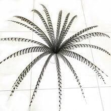 Hotsale 10 pcs 80 100 ซม. ยาวขนไก่ฟ้าธรรมชาติ Zebra ขนไก่ฟ้า Samba Feather Lady Amherst ไก่ฟ้า feathers