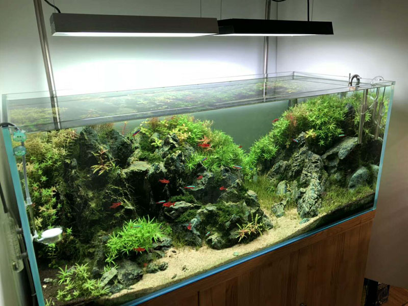 2018 04 growing tank growing tank aquatic live plant pot bowl holder