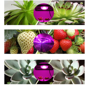 Image 5 - AC220V 110V COB LED Chip Phyto Lamp Full Spectrum 50W 30W 20W LED Diode Grow Lights fitolampy For Seedlings Indoor