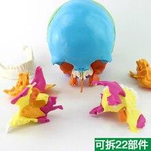 1:1 в натуральную величину медицинский человек череп модель микро Пластической Хирургии Стоматологическая головка Съемная 22 части с английским руководством