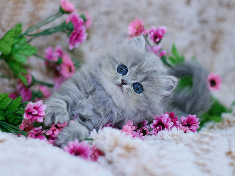 5D Diy Full diamond embroidery Kitten play flower picture diamond Painting home decor diamond mosaic Needlework cross stitch
