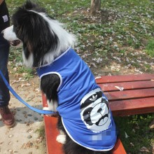 Pet Clothing T-shirt For Dogs
